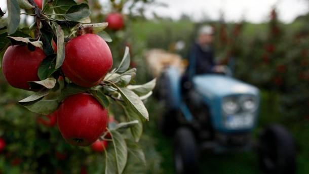 Kelterer freuen sich über gute Mostobst-Ernte