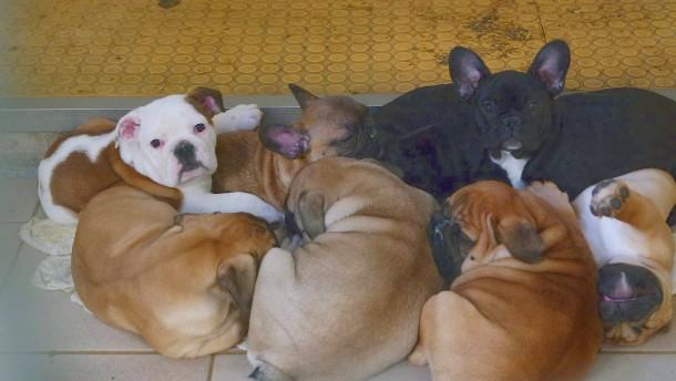 101 Hundewelpen in Transporter entdeckt