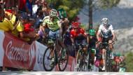 Am Limit: Contador, Quintana, Chaves und Froome (von links) schenken sich nichts.