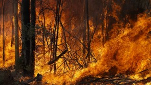 Katastrophenzustand in Australien
