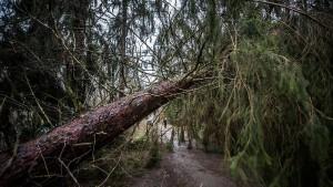 86 Jahre alter Spaziergänger aus Wald gerettet