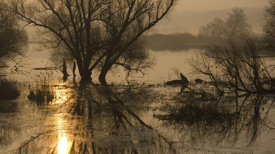Exakt 50,1 Prozent der zehntausend Hektar Parkfläche wurden zu Totalreservaten erklärt - ein lange Zeit umstrittener Kompromiss zwischen Naturschutz und Landwirtschaft.