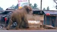 Elefant wütet durch indische Stadt