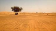 Das Leben ist hart in der Wüste: die Sahara im Süden Algeriens