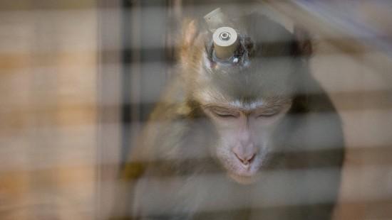 Wissenschaft mit Technik statt Tierversuchen