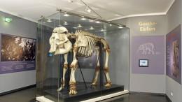 Elefant mit Goethe-Knochen