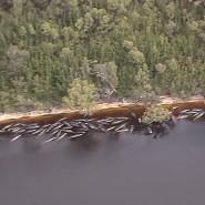 Dieses Videostandbild zeigt zahlreiche gestrandete Wale entlang der Küste nahe der abgelegenen Westküstenstadt Strahan im Inselstaat Tasmanien.