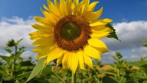 Meteorologen rechnen mit Bilderbuch-Sommer
