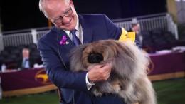 Pekinese Wasabi holt Titel bei Westminster-Hundeschau