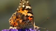 Bis zu 80 Prozent weniger Insekten in Deutschland