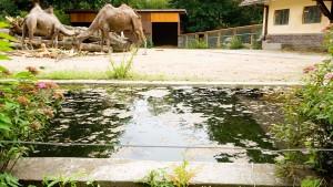 Offene Fragen zum ertrunkenen Zweijährigem im Frankfurter Zoo