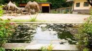 Das Kind war am Freitagnachmittag im Wassergraben des Kamelgeheges ertrunken.