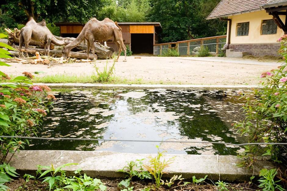 Zoo Frankfurt Unfall