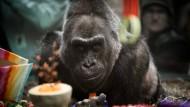 Wahrscheinlich ältester Gorilla der Welt gestorben