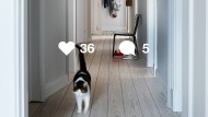 Heile Wohnwelt: Mit süßer Katze, aber ohne schmutziges Geschirr.