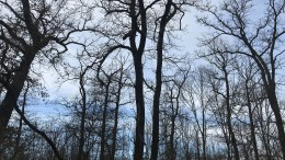 Mehr als die Summe der Bäume