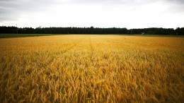 Immer mehr Bauern in Hessen geben auf