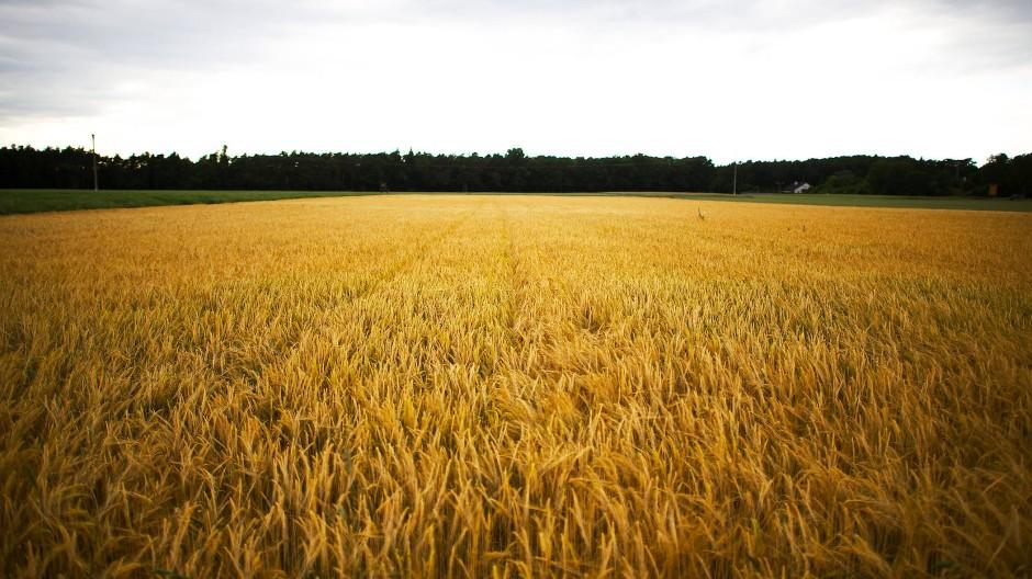 Dunkle Wolken: Der viele Regen hat dafür gesorgt, dass die Ernte in Hessen weniger gut ausgefallen ist, als erwartet.