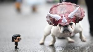 Halloween – nur für Hunde!