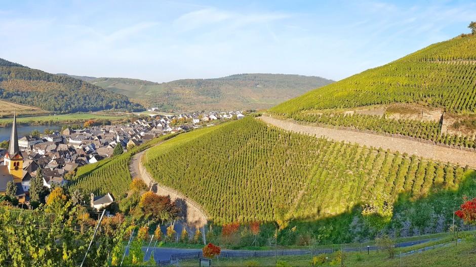 Die Sonnenseite der Mosel: Wer eine Weinlage wie den Zeltinger Schlossberg bewirtschaften darf, weiß ganz genau, was ein Standortvorteil ist.