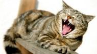 Wurscht: Was der Mensch so treibt, interessiert nicht nur diese Katze.... überhaupt nicht