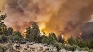 Waldbrände und Hitzewelle