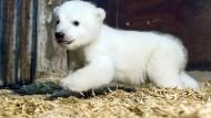 Der kleine Eisbär hat endlich einen Namen