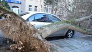 Ein umgestürzter Baum liegt in Erfurt neben einem geparkten Auto.