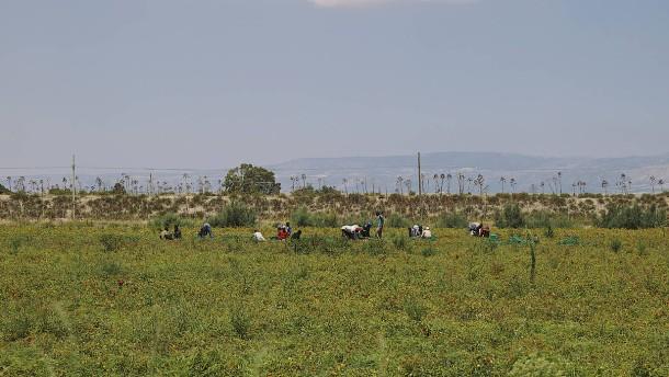 Die Tomate, Afrika und wir