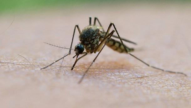 Von einer Mückenplage ist Deutschland noch weit entfernt