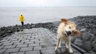Spaziergänger in Hamburg: Wer jagt denn bei diesem Wetter seinen Hund vor die Tür?