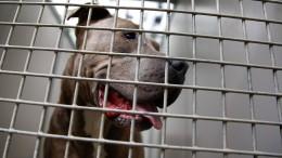 Tierschutzbund fordert Hundeführerschein für alle Halter