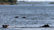Hippo aktiv