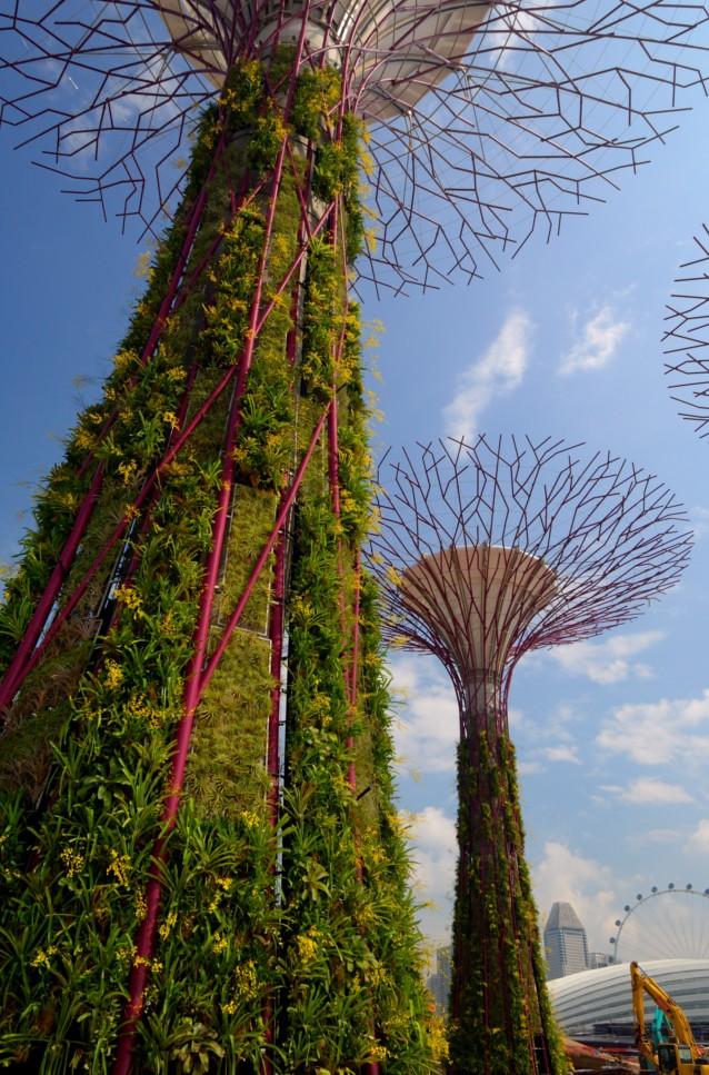 bilderstrecke zu botanische g rten in singapur die b ume der welt f r den garten am meer. Black Bedroom Furniture Sets. Home Design Ideas