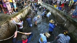 Verein darf Frauen bei Brauchtums-Fischen nicht ausschließen