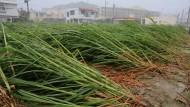 Taifun trifft auf Okinawa