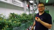 Raumfahrtingenieur Paul Zabel erntet in einem speziellen Gewächshaus in der Antarktis dort gezogene Tomaten.