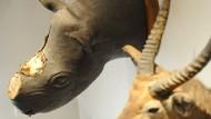 Selbst in Museen sind die Tiere nicht sicher: In Offenburg hatten Diebe 2012  mit einem Vorschlaghammer die Hörner aus einem präparierten Nashorn-Kopf geschlagen.