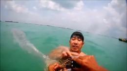 Delfin von Schwimmern gerettet