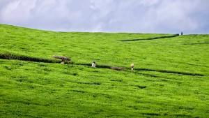 Landwirtschaft muss nicht schmutzig sein