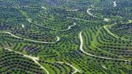 Plantagen, so weit das Auge reicht. Allein Indonesien produziert mehr als 28 Millionen Tonnen Palmöl pro Jahr.
