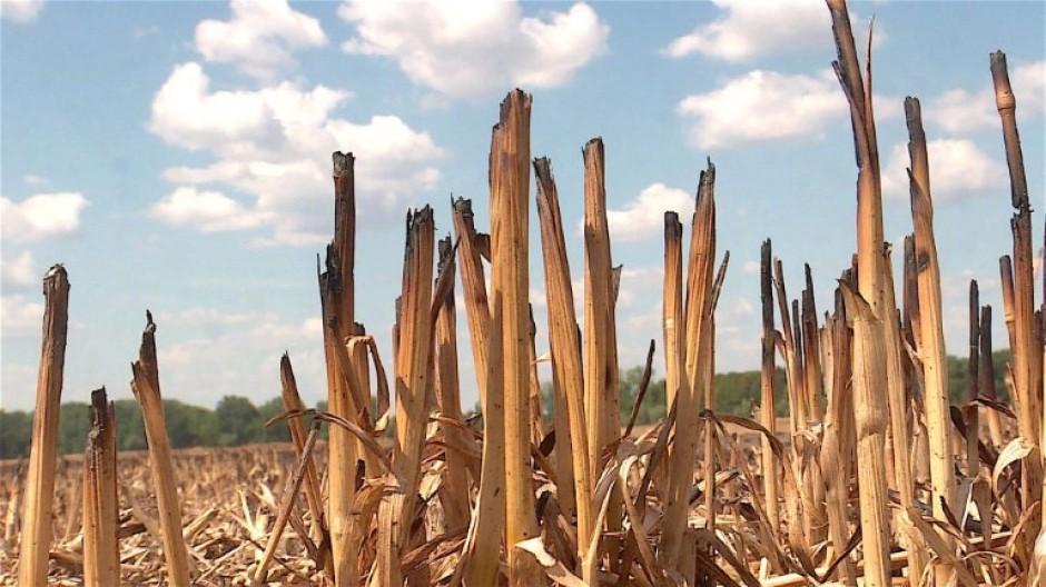 Bauern erwarten Jahrhundert-Missernte
