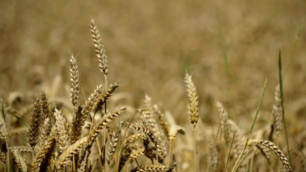 Banken haben Ärger mit der Agrarspekulation