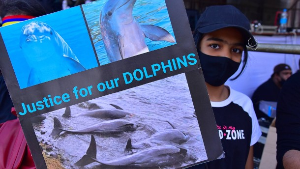 Mysteriöses Delfinsterben und Proteste in Mauritius