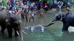 Elefantendame tappt in Sprengfalle und stirbt