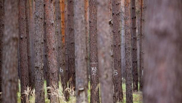Wie der Wald unter dem Klimawandel leidet