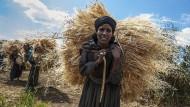 In den ländlichen Gebieten Äthiopiens arbeiten viele Frauen in der Landwirtschaft.
