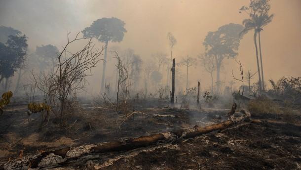 Brasiliens Regenwald stirbt dahin
