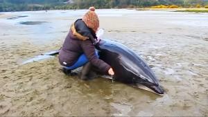 Helfer retten Delfine