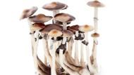 Wie psychedelische Pilze bei Depression und Angststörungen helfen